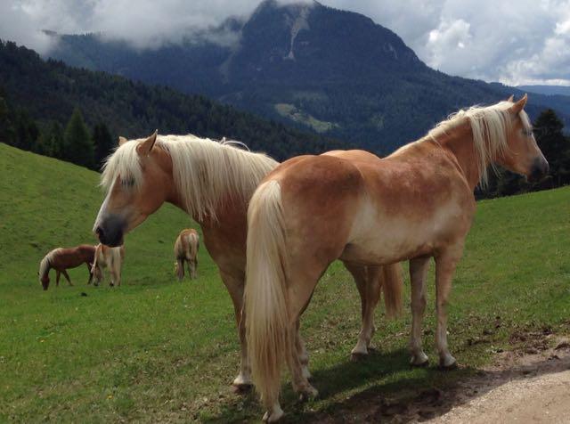 Foto Pferde (1)